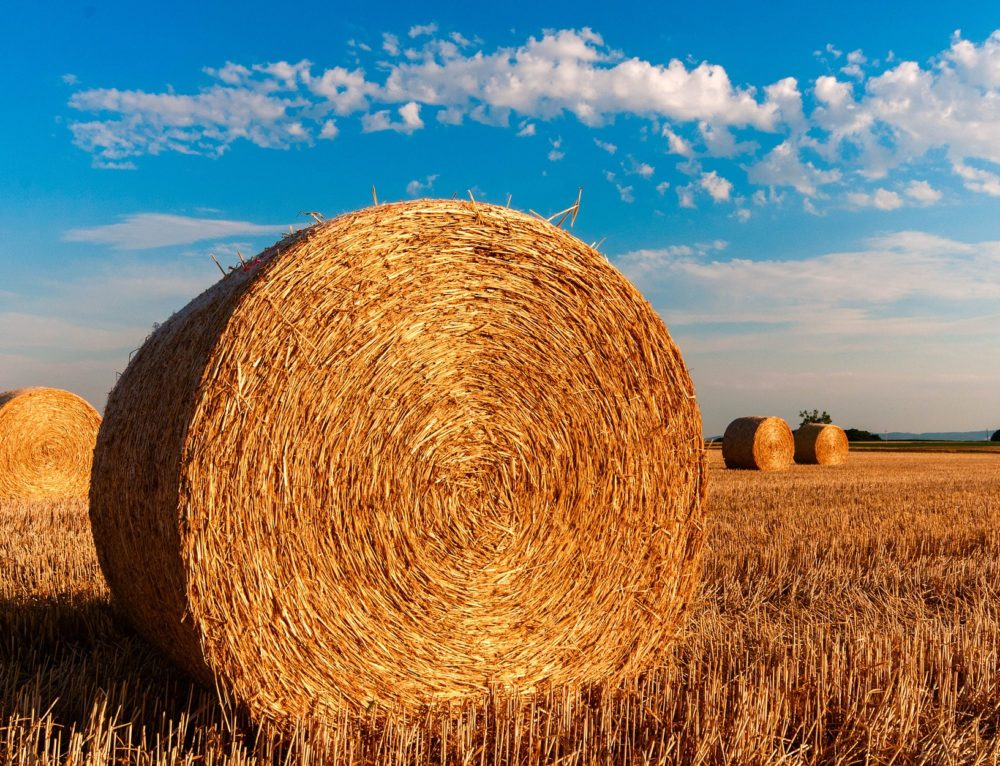 Gorące dni okresem kiedy najczęściej dochodzi do wypadku na w gospodarstwie rolnym. Wypadki w rolnictwie, jak postępować w pigułce!