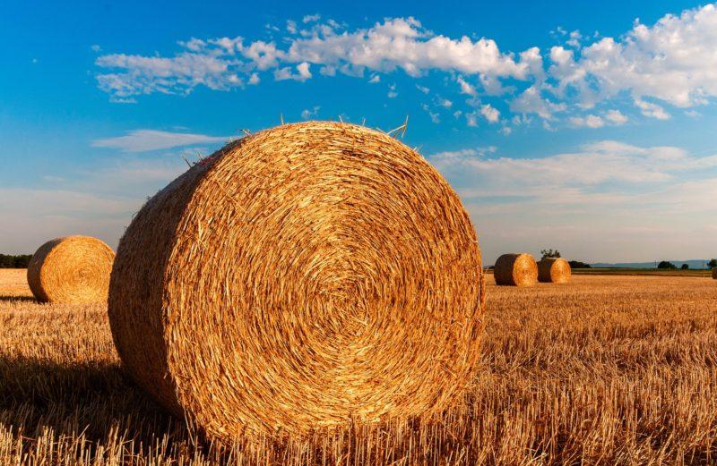 Odszkodowanie za wypadek w rolnictwie, pomoc w zakresie dochodzenia roszczeń od ubezpieczyciela